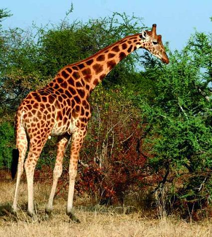 Safaris en Kenia o Tanzania